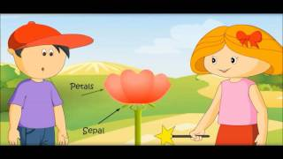 Parts of a flower and their Functions for kids
