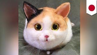 getlinkyoutube.com-진짜 고양이같은 핸드백, 일본에서 출시된 뒤, 돌풍, 가격은 후덜덜