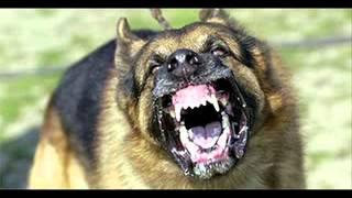 getlinkyoutube.com-أقوى خمسة كلاب بالعالم