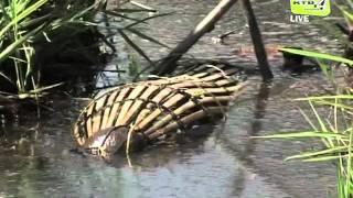 getlinkyoutube.com-Kaedah menangkap Ikan Karuk.flv