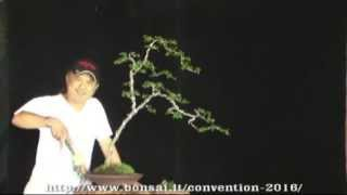 getlinkyoutube.com-Black Scissors Bonsai Styling Video Contest – Lithuania 2016 – Robert Steven