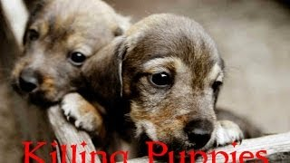 getlinkyoutube.com-Girl kills puppies - video in link