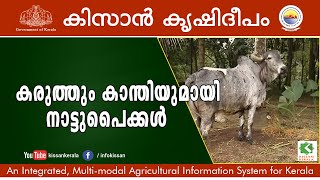 getlinkyoutube.com-Success story on Rearing of 100 indigenous variety of cows by Sri.Vinod,  Pathanamthitta-599