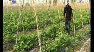 getlinkyoutube.com-เกษตรทำเงิน#เปลื่ยนทุงนาเป็นแปลงแตงกวาออแกนิกส์