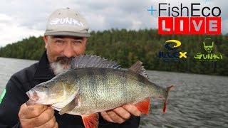 getlinkyoutube.com-LIVEfiske efter abborre med Frédéric Jullian!