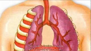getlinkyoutube.com-The Respiratory System