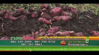 getlinkyoutube.com-รายการเกษตรติดจอ เทป 222 มันเทศคุณอ๊อฟใช้ พลัส100 จ.สุพรรณบุรี