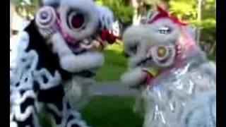 getlinkyoutube.com-A Lion Story - Gio Nam Mua Lan Production