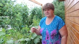 getlinkyoutube.com-Огурцы.Огурцы в мешка. Маленькие хитрости для большого урожая.