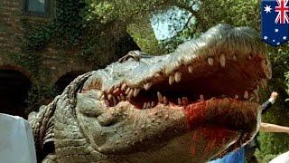 Wędkarz zjedzony przez 4 metrowego krokodyla.