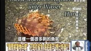 getlinkyoutube.com-「瞬間將獵物吞噬」 石斑咬鯊魚 海底殺手「博比特蟲」!!20140822-07
