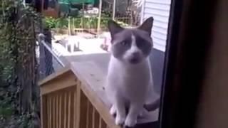مسكينه القطه طردوها من البيت