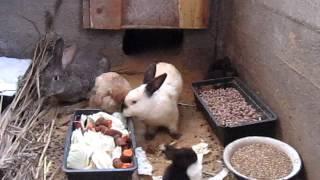 getlinkyoutube.com-кролики, ямный метод 2