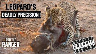 getlinkyoutube.com-Leopard Killing And Eating Screaming Warthog! Incredibly Graphic Sighting!