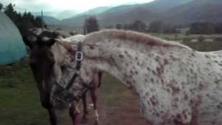 getlinkyoutube.com-種馬バルダくんがんばっております