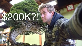 getlinkyoutube.com-VLOG #9 - $200K BONSAI?!