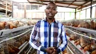 getlinkyoutube.com-Poultry evolution in Africa http://westgateintegrity.com/