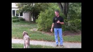 getlinkyoutube.com-Alpha Dog Obedience Training - Basic Steps to Train Your Dog