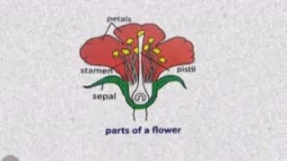 Learn Parts of Flower NCERT Class 4