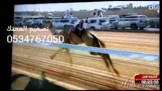 شله في الجزيره  هجن الشحانيه اداء المبدعين /حسين ال كوري ومحمد ال نجم