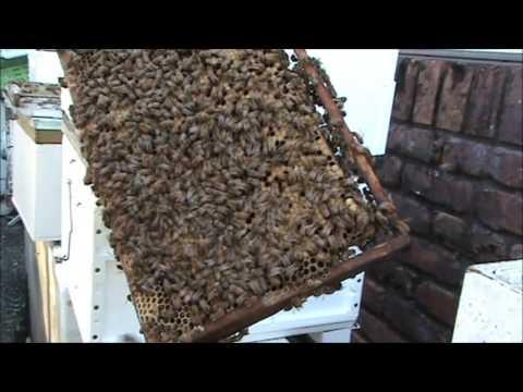 Beekeeping: Splitting a Split.