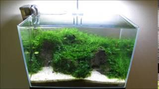 getlinkyoutube.com-ADA Mini L Dry Start Moss Tank