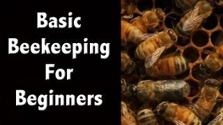 getlinkyoutube.com-Beekeeping For Beginners and Beekeeping Basics - Off Grid Living