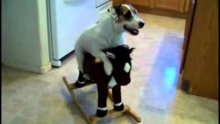 getlinkyoutube.com-Este perro hace de todo! simplemente Genial! | OcioFX