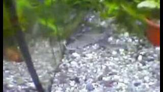 getlinkyoutube.com-Zoohandel - Die Ware Tier