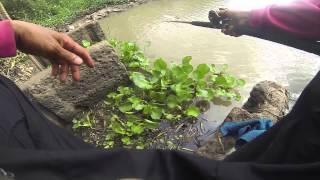 getlinkyoutube.com-FIN frog # เหยื่อเย็นลุงปุ้ย หยอดท่อตกปลากดคลองน้ำแห้ง