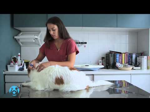 Come fare un bagno antiparassitario al cane animali dal mondo - Come fare il bagno al cane ...