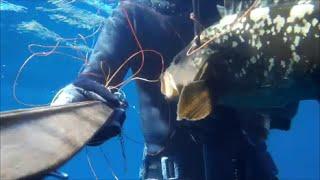 getlinkyoutube.com-CERNIA DELLA POSIDONIA ALL' ARGENTARIO pesca sub