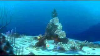 getlinkyoutube.com-Alla ricerca di Nemo: Le presentazioni di Dori XD!!!