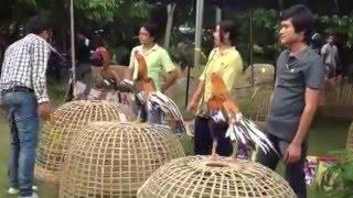 getlinkyoutube.com-งานประกวดไก่ มน 2555 เหลืองหางขาว