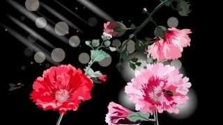 getlinkyoutube.com-Поздравления любви и самые красивые цветы. Насладись поздравлением