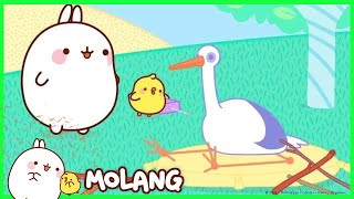 Molang - The Stork   Cartoon for kids
