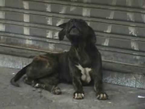Cachorro chora pela morte do seu dono .