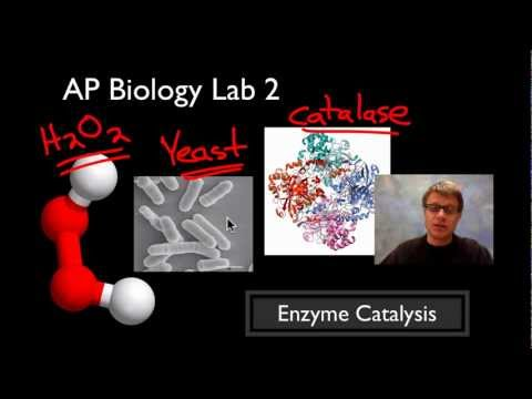 AP Biology Lab 2: Enzyme Catalysis