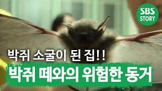 getlinkyoutube.com-박쥐 떼와의 위험한 동거 @TV동물농장 130825