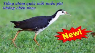 getlinkyoutube.com-Tiếng chim quốc mồi chuẩn miễn phí không chèn nhạc (Mới nhất)