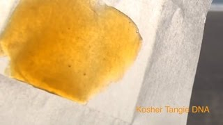 Secret Cup Shatter Hash Winner Chill Hill Extracts, Blue Dream KleinScope & Kosher Tangie...