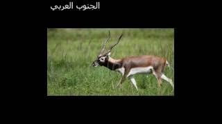 getlinkyoutube.com-محمد بن غرمان   ارض الجنوب