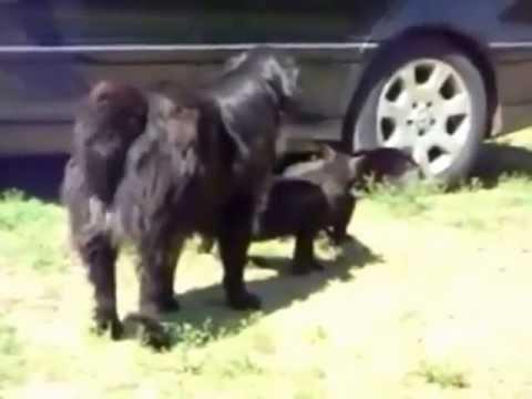 طوشة قطط عجيبة والحكم ثلاث كلاب