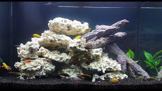 Setting Up a 65 Gallon African Cichlid Aquarium