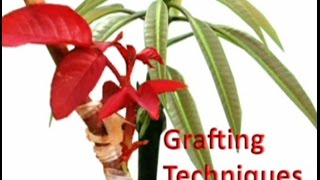 getlinkyoutube.com-Grafting Techniques