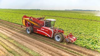 Grimme VARITRON 270 Platinum TERRA TRAC | New generation of 2-row self-propelled Potato Harvesters