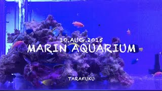 getlinkyoutube.com-Marin Aquarium(魚大水槽)