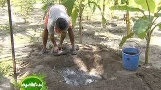 getlinkyoutube.com-Success story of a traditional farmer : Narayanapillai