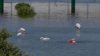 Flamingo Bath