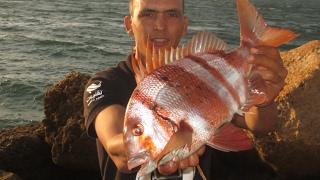 getlinkyoutube.com-صيد سمكة باجو روايال Pagre rayé [ Hurta ] - بالقصبة بطعم سيبيا [حبار]